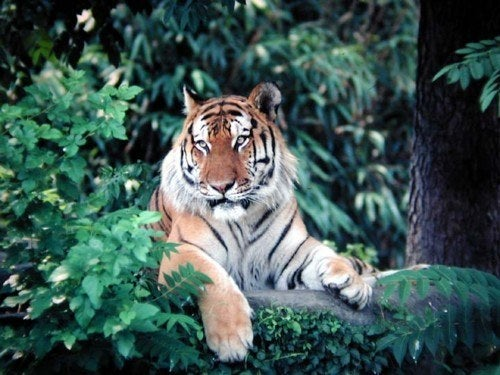 No, this isn't a scene from Life of Pi. At the Indian Forest Service, Vinod Kumar and his team are using airborne LiDAR data (radar imagery using lasers) to better forestry management. They've even developed a method of identifying trees just by looking at the 3D imagery, no special glassed required.