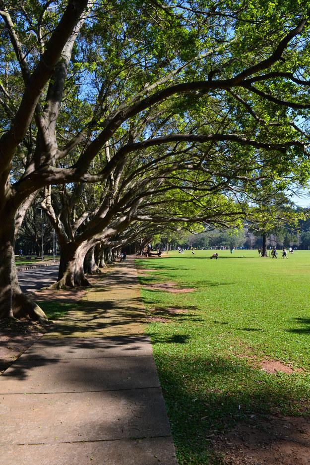 20 lindas fotos para se apaixonar pelo Ibirapuera, eleito o 8° melhor parque do mundo