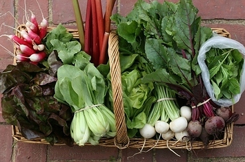 31 Things To Do With Confusing CSA Vegetables