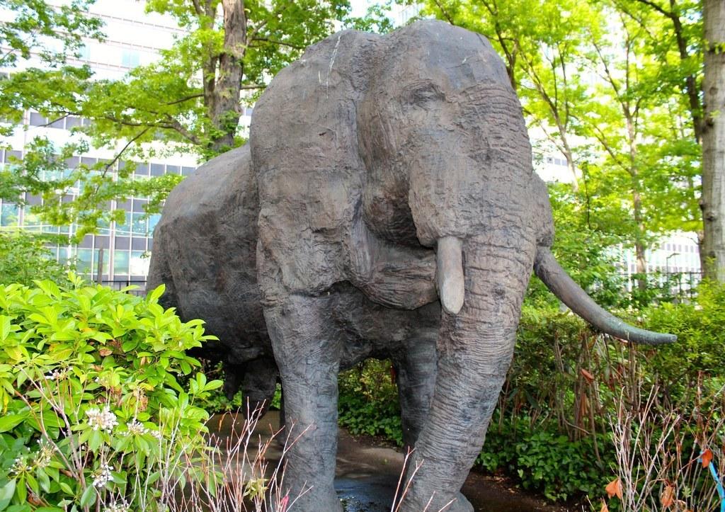 Elefant big dick