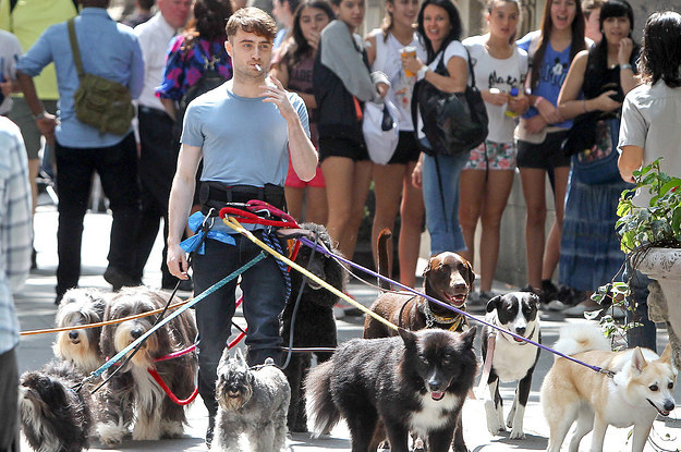 these pictures of daniel radcliffe walking 12 dog 2 20750 1404305793 40_dblbig these pictures of daniel radcliffe walking 12 dogs while smoking a