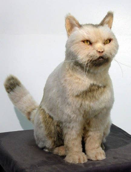You were afraid there would be a taxidermy cat on this list, weren't you? Sorry. This is the real deal. This cat, and a collection of his friends, here.