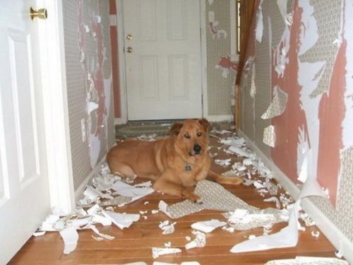 This dog who expressed how he really felt about the wallpaper.