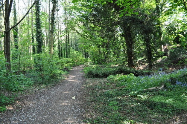 """Young John Ronald Reuel (yes, that's what that second R stands for) grew up in Birmingham, and Moseley Bog was where he often played as a child. He has stated that the nature reserve served as his inspiration Middle Earth's """"Old Forest"""", the home of Tom Bombadil."""