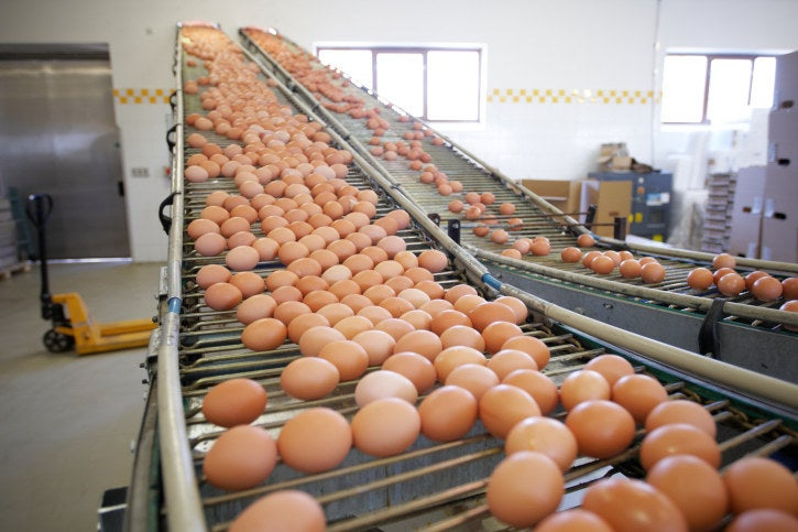 "Although most of the eggs in the United States will be washed, weighed, sorted and packaged in egg cartons, a third of them will be processed to obtain products such as ""liquid eggs"" & quot; says Serena Schaffner, of the American Egg Council. Mayonnaise is made with liquid eggs. ""To produce liquid eggs, whole eggs are placed in machines that open them and, if necessary, separate the egg whites and yolks."" says Schaffner. Any eggs sold without husk should be pasteurized, or heated, to reduce the risk of food infection. Schaffner states: ""Most mayonnaise producers use frozen and salted egg yolks in their recipes. & Quot;"