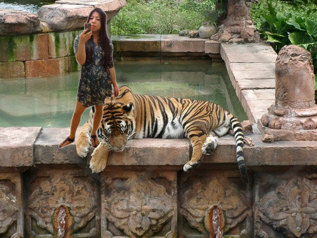 Oh, I'm just petting my TIGER. My office for today. #pussy