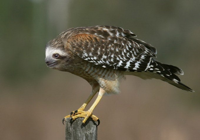I wonder if he flies in slow motion.