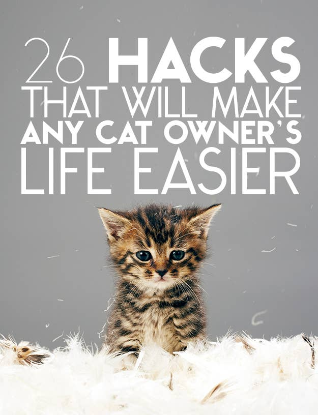 Hacks That Will Make Any Cat Owners Life Easier - 29 cats lost way life