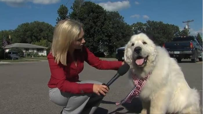 This Dog Was Elected The Mayor Of A Small Town In Minnesota