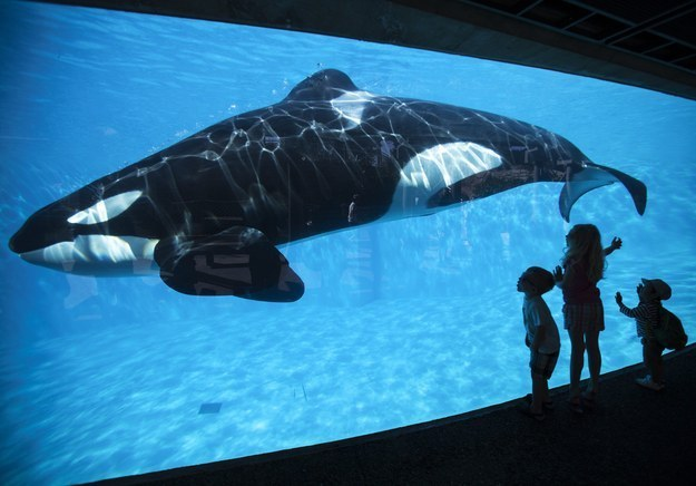 After Stock Crashes, SeaWorld Expands Orca Habitats And Donates $10 Million For Research And Conservation