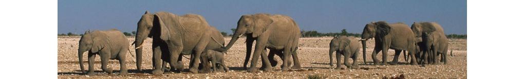 World Wildlife Fund - US