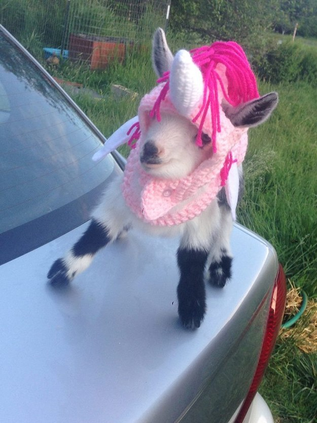 22 Adorable Goats Wearing Clothes