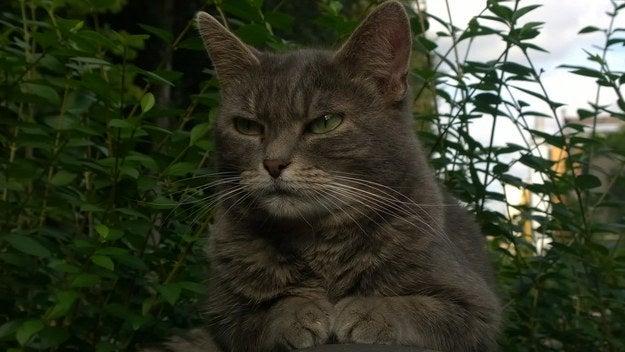 Vous en avez marre que les chats du voisin se baladent à travers vos fleurs ? Il suffit de saupoudrer un peu de marc de café et de mettre des écorces d'orange là où vous ne voulez pas qu'ils marchent.