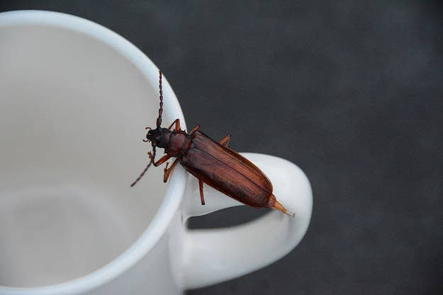 Vous aurez juste besoin de marc de café, d'une canette et d'un peu de scotch double-face. Obtenez les instructions ici.