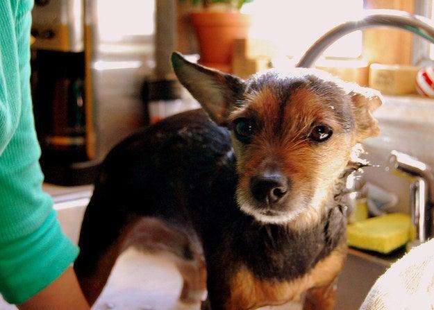 Ajoutez un peu de marc de café au shampoing de votre chien pour créer un répulsif naturel contre les puces.