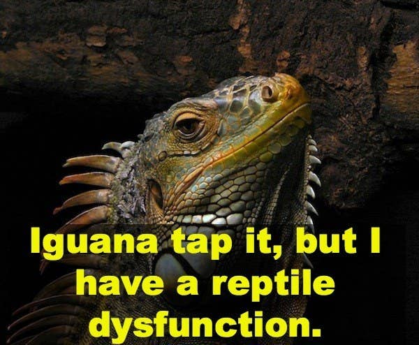 17 Brilliant Animal Puns That Are Definitely Not Kitten Around