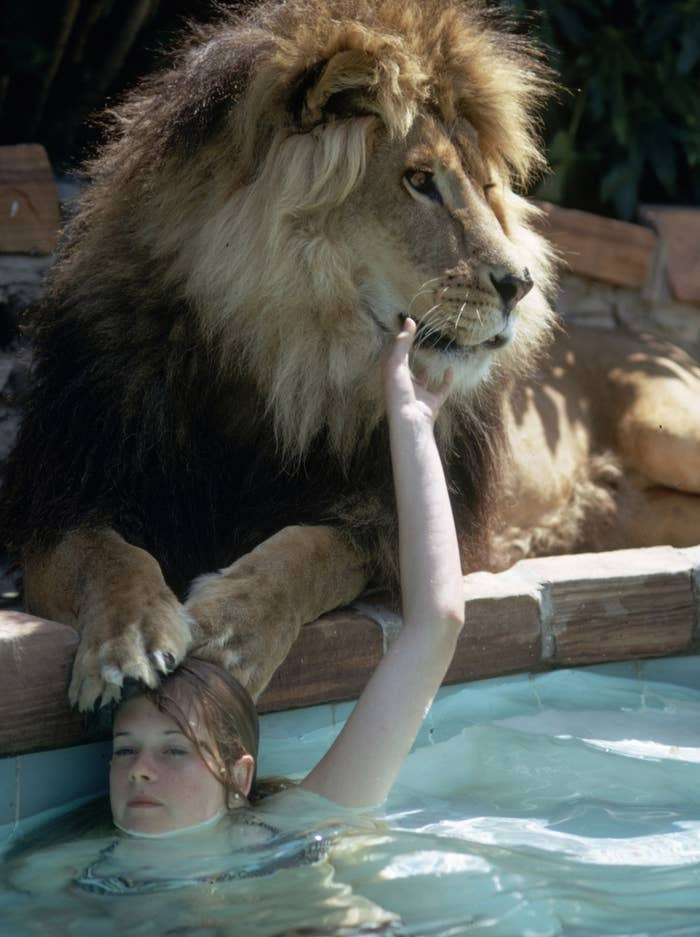 These Photos Of A Teenage Melanie Griffith And Her Pet Lion In The