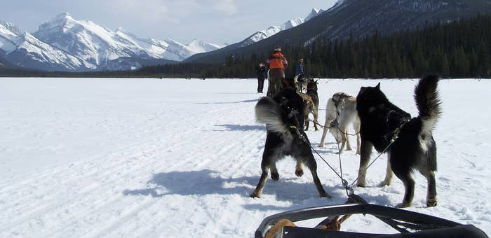 What was once an essential form of winter transportation is now a chance for you to speed across the snow while taking in the landscape and spending time with some incredible dogs. Learn to mush, or just be a willing passenger.