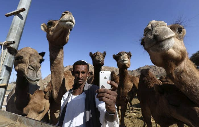 A man, possibly a millennial man, takes a selfie with camels at a farm in Taif, Saudi Arabia