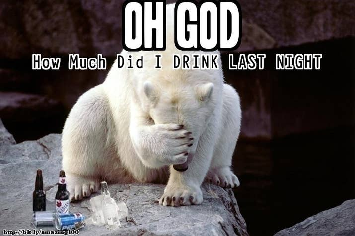 Funny Zoo Memes : Alcohol memes oh god.. how much did i drink last night