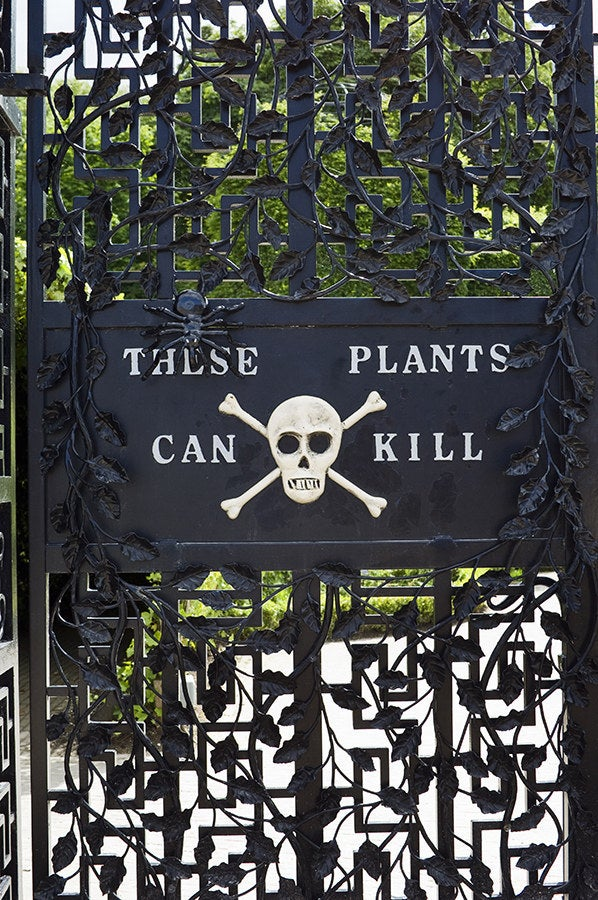 The Alnwick Poison Garden is pretty much what you'd think it is: a garden full of plants that can kill you (among many other things). Some of the plants are so dangerous that they have to be kept behind bars. It's not exactly your typical stroll through a botanical garden.