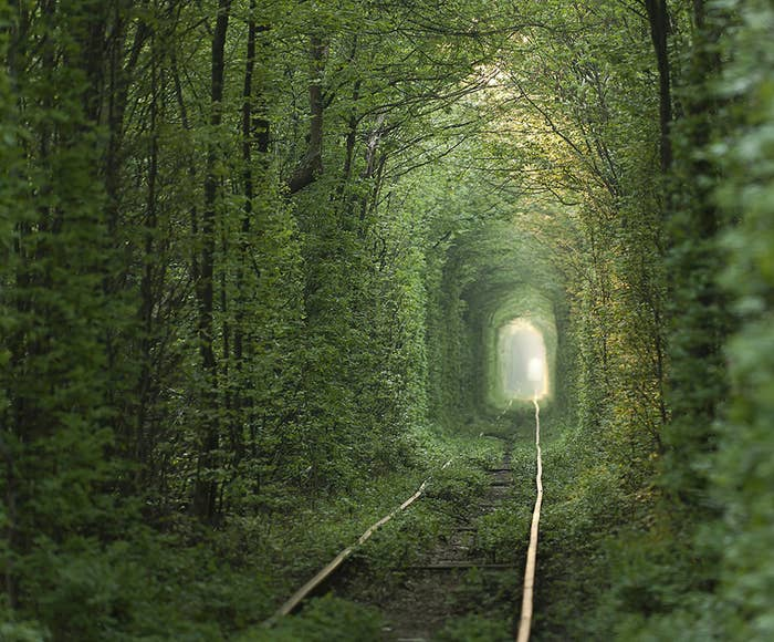 "You would be forgiven if you believed this to be the path to Narnia. Located in Klevan, Ukraine, this ""Tunnel of Love"" is actually a private railroad for a nearby fiberboard factory."