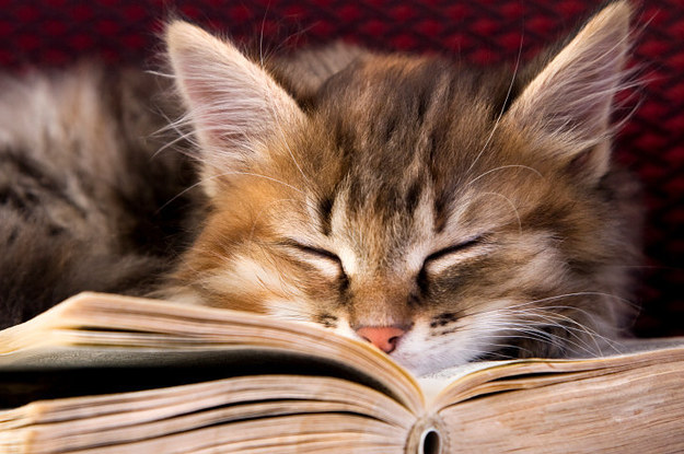 All about cats: Books for cat lovers