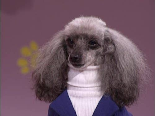 Animals Wearing Turtleneck Sweaters - 22 adorable animals wearing miniature sweaters