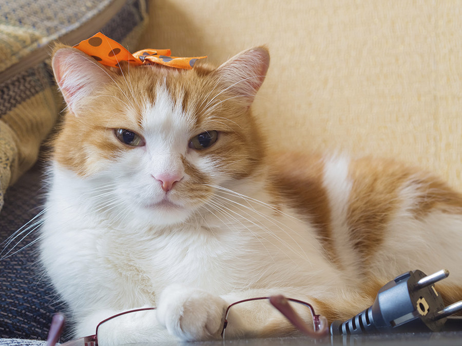 Home Decor Quiz Buzzfeed Of 15 Cats That Are Very Disappointed In You