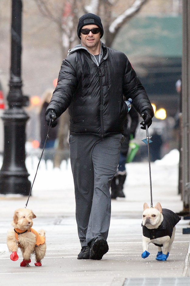 Do Dogs Like Wearing Booties