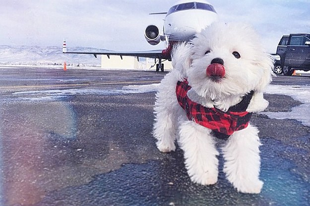 Demi Lovato's New Puppy Might Just Be The Most Amazing Puppy Ever