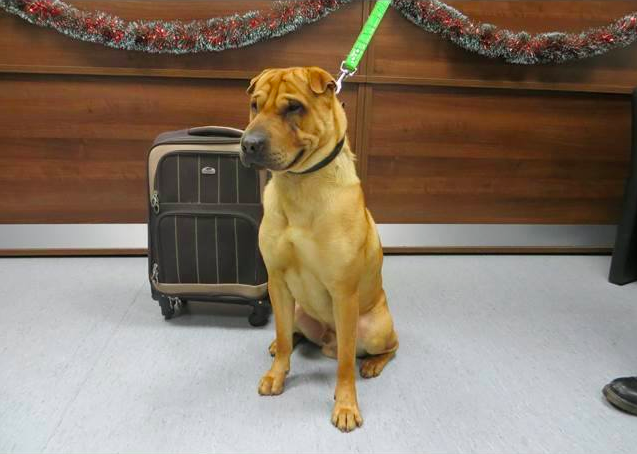 The charity said the dog was found on Friday evening tied to railings at Ayr railway station along with a suitcase full of his belongings, which included a pillow, a toy, a food bowl, and food.