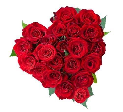 Les roses et la Saint-Valentin vont de pair, tout comme le beurre d'arachide et la confiture (sauf si vous êtes allergique au beurre d'arachide, auquel cas cette analogie est horrible). Au Canada, nous produisons plus de 8 millions de roses par année, mais en général pas en février. Mais ne vous inquiétez pas : les importations viennent à la rescousse chaque année. Nous importons plus de 12 millions de roses, principalement de la Colombie. La mise en place d'un Accord de libre-échange avec la Colombie il y a plus de six ans est-elle une coïncidence ? On ne pense pas.