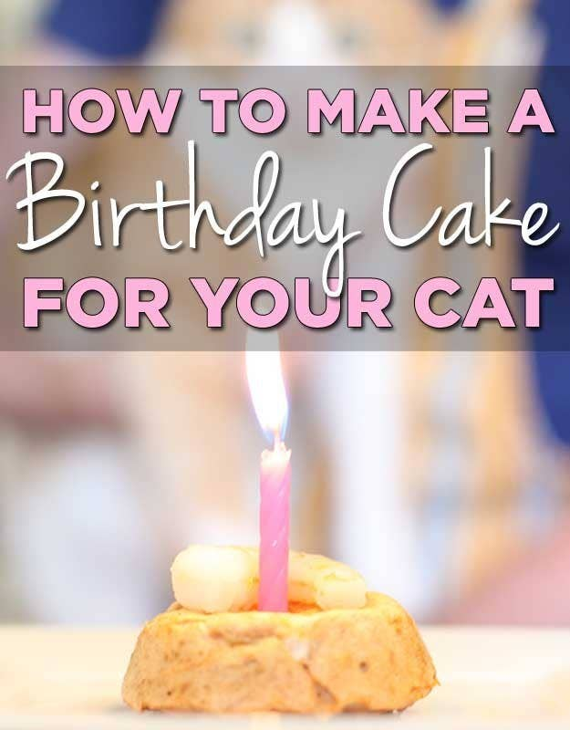 Cake For A Cat