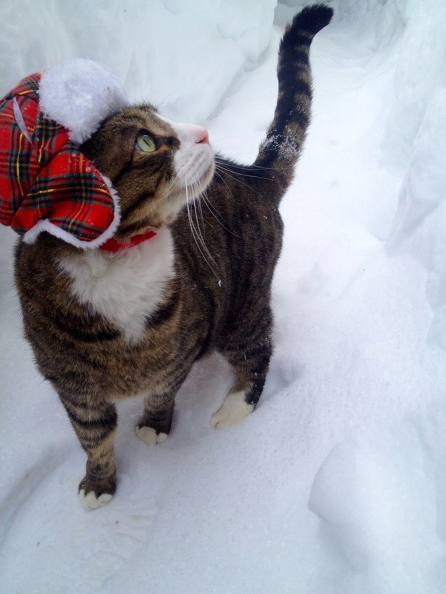 This Intrepid Cat Will Inspire You To Survive Winter