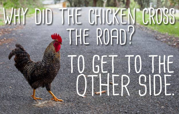 The Joke About A Chicken Crossing The Road Is Way Better Than You