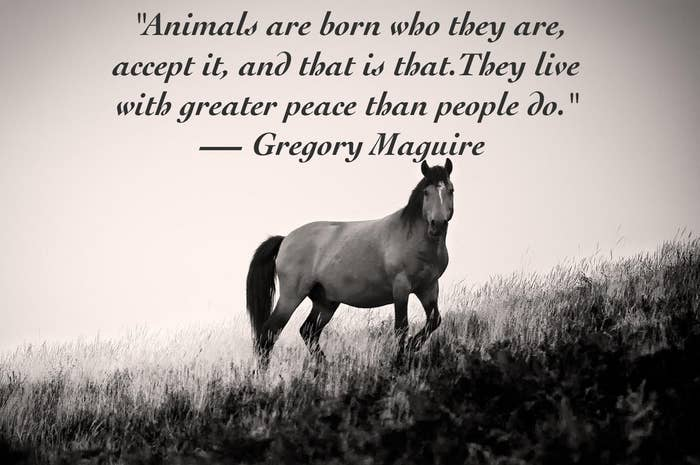 Love Animals Quotes Awesome 48 Quotes About Animals That Will Make You A Better Human
