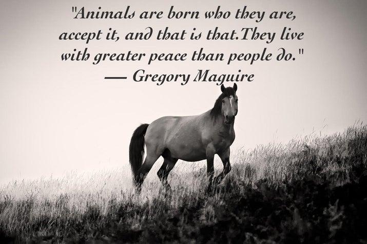 Resultado de imagen de animals quotes