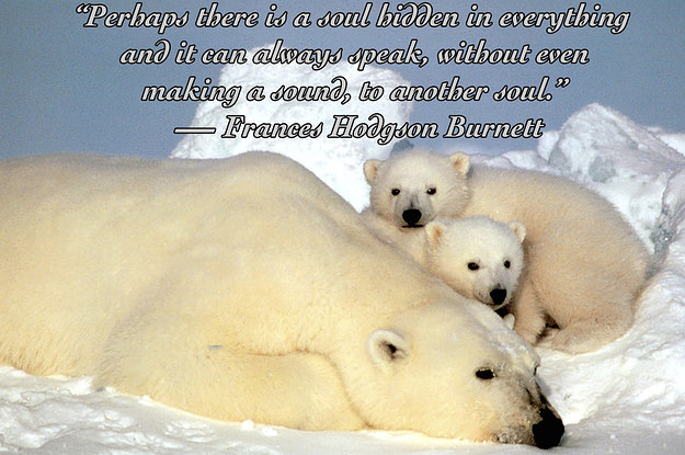 Animals Quotes Custom 25 Quotes About Animals That Will Make You A Better Human