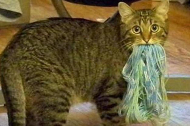 26 Hacks That Will Make Any Cat Owner S Life Easier