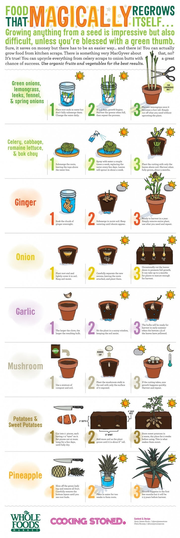 Save some money: Here's a list of food that ~magically~ regrows itself.