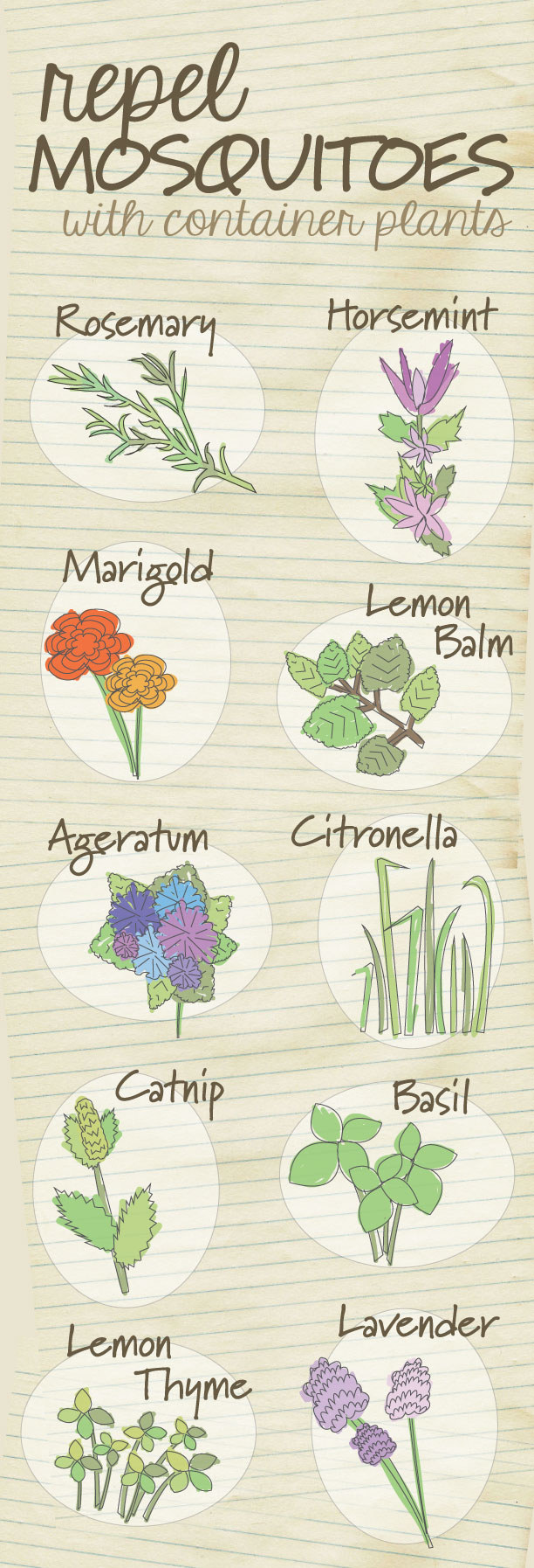 Get rid of the bug spray and repel mosquitos naturally using these plants.