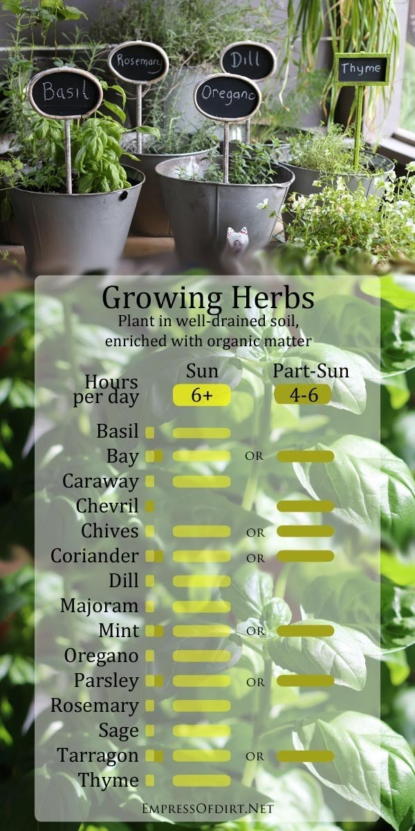 Once you make your herb seedling selections, figure out how much light they'll need.
