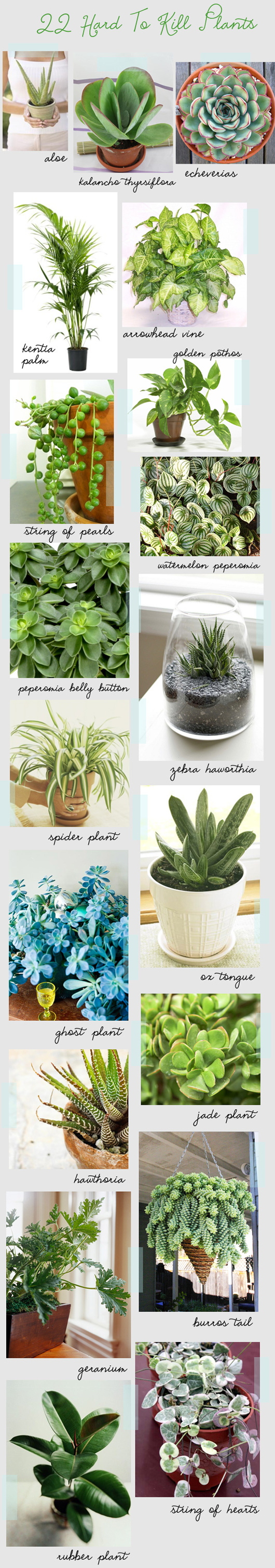 Have a black thumb? These plants are hearty and hard to kill.
