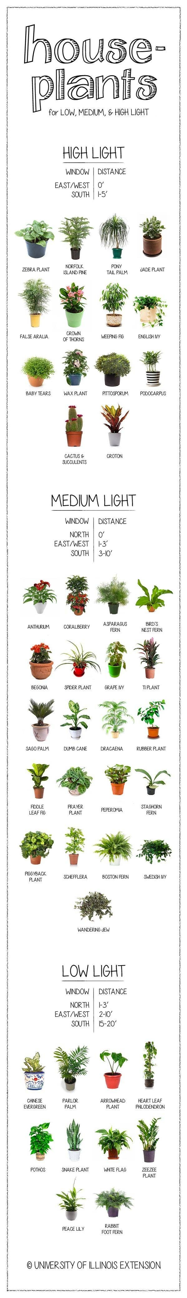 Houseplants Care Guide