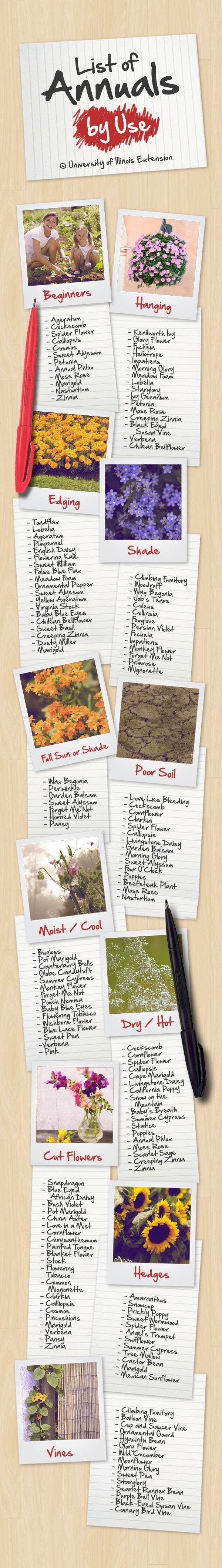 Here's a list of how you can use annuals (plants that you need to replant every year) in your garden.
