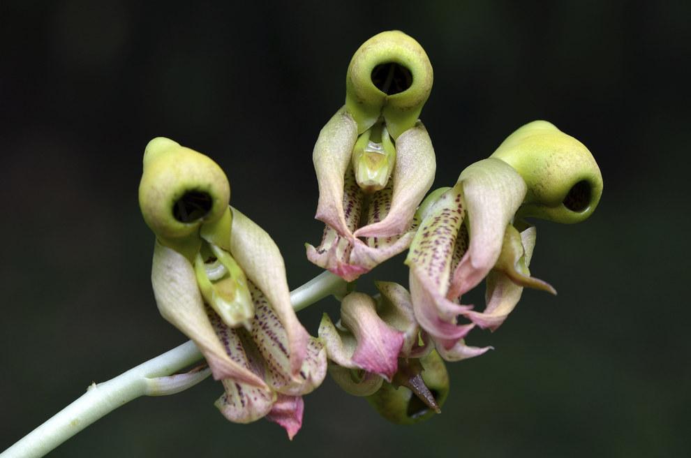 Lo peor de todo es la flora exótica de Guatemala.