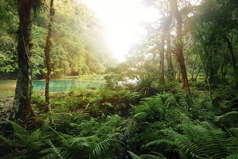 ¿Quién va a querer explorar un bosque así de terrible?