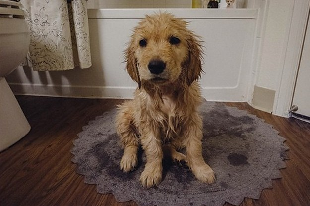 19 Thoughts Your Puppy Has During Their First Bath