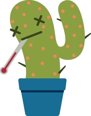 Measles cactus